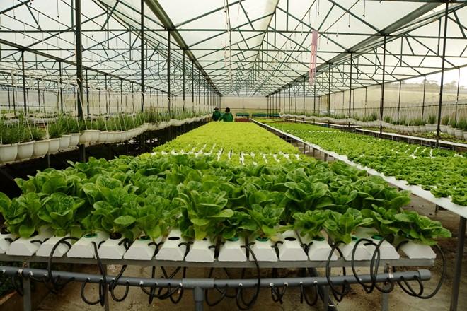 Kinh doanh rau sạch tự trồng